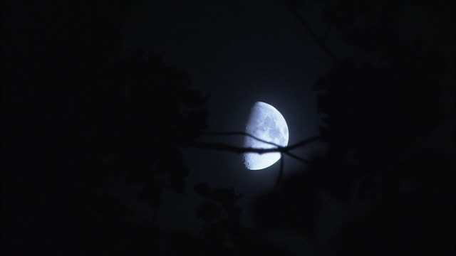 a half moon shines behind tree branch silhouettes. - half moon stock videos & royalty-free footage