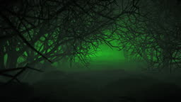 Halloween In Night Forests