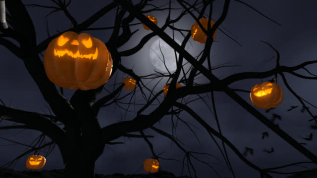 halloween pumpkins, low view - jack o' lantern stock videos and b-roll footage