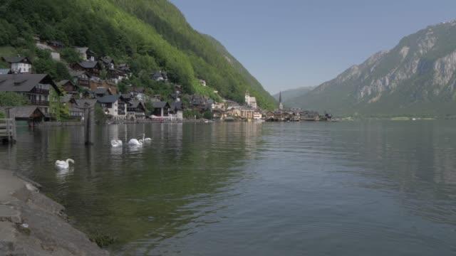 hallstatt lake, swans and village, hallstatt, unesco world heritage site, salzkammergut, austrian alps, austria, europe - アッパーオーストリア点の映像素材/bロール