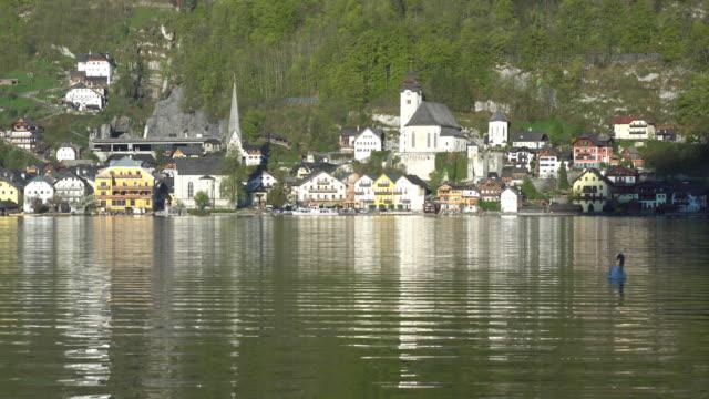 vídeos y material grabado en eventos de stock de hallstatter ver lago con un cisne en hallstatt, austria - cultura austríaca