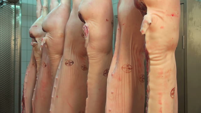 halves of pigs in cold storage, butchery / Trier, Rhineland Palatinate, Germany