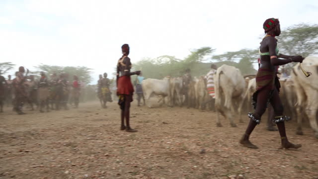 hamar tribe people collecting the cows for the bull jumping ceremony in the village omo river ethiopia - アフリカの角点の映像素材/bロール
