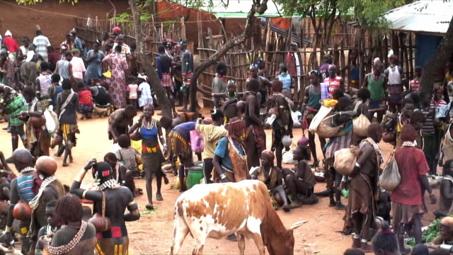 ms zo ws hamer tribe people on food market, omo river valley, ethiopia - cattle stock videos & royalty-free footage