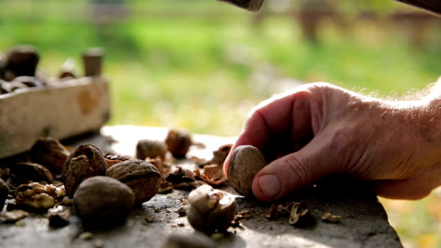 hammer and cracked walnuts - plank variation stock videos & royalty-free footage