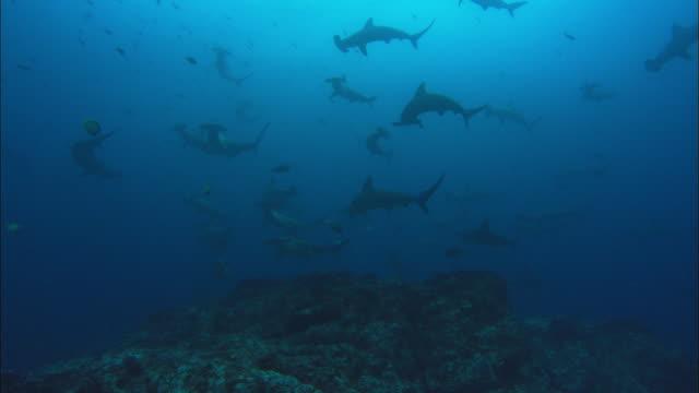 hammerhead, costa rica, pacific ocean  - costa rica stock videos & royalty-free footage