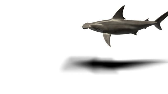 hammerhead shark isolated on white - animal fin stock videos & royalty-free footage