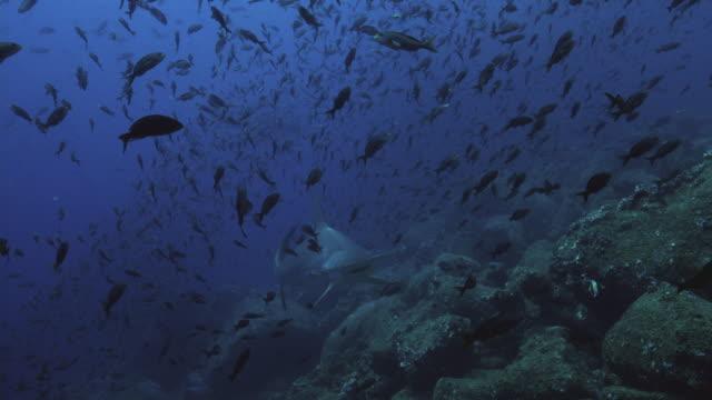 hammerhead shark - langsam stock-videos und b-roll-filmmaterial