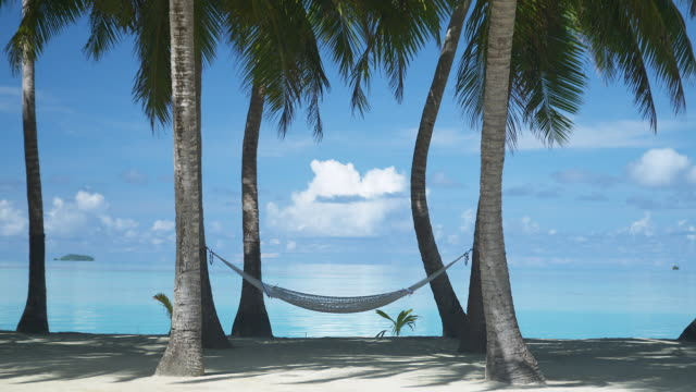 ms, hammock between palm trees at sandy tropical beach, aitutaki lagoon, aitutaki, cook islands - aitutaki lagoon stock videos & royalty-free footage