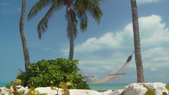 ms, td, hammock hanging between palm trees with ocean in background, abaco islands, bahamas - fan palm tree stock videos & royalty-free footage