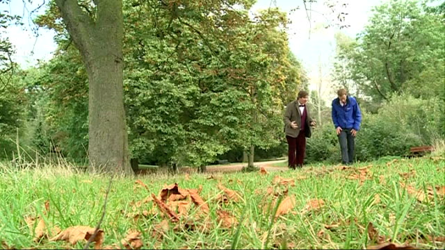 hampstead heath to stage conker championships england london hampstead heath ext people sat on the heath grass around tree as conker drops reporter... - intricacy stock videos & royalty-free footage
