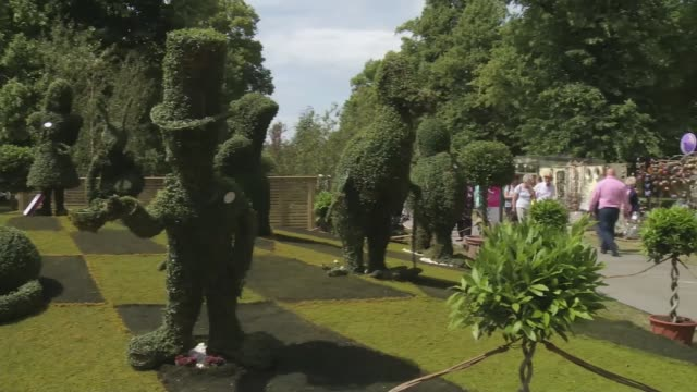 hampton court palace flower show opens; england: london: hampton court: ext gv topiary hedging figures on display pink dahlia on display white roses... - ダリア点の映像素材/bロール