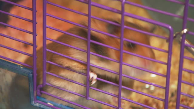 a hamster crawls out of its little cage when a hand opens the door. - käfig stock-videos und b-roll-filmmaterial