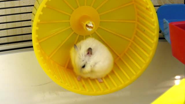 vídeos y material grabado en eventos de stock de en la rueda de hámster - hamster