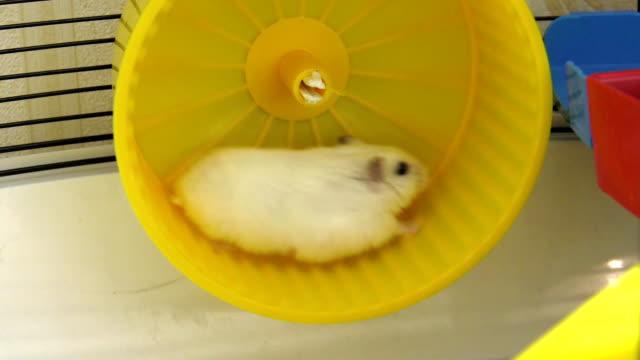 vídeos de stock, filmes e b-roll de hamster a correr na roda - roda