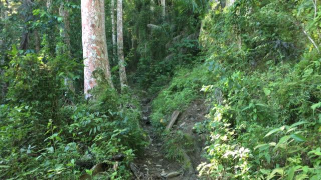 hanabanilla, path towards the top of 'la loma de la atalaya', cuba - エコツーリズム点の映像素材/bロール