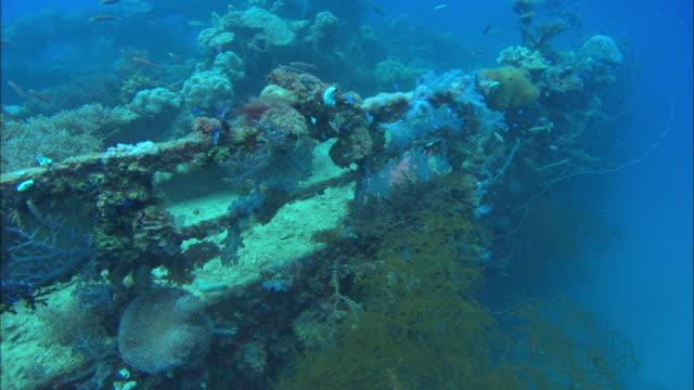 Hanakawa, Port deck mast, low angle, Chuuk Lagoon, South Pacific