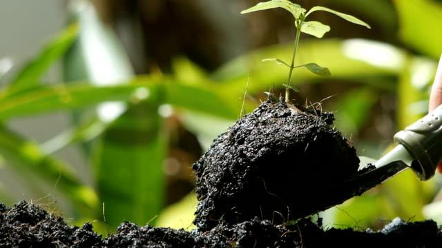 vidéos et rushes de main et pelle à plantation des semis vert - jardin potager