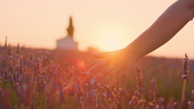 la cu hand caressing lavender plants at sunset - provence alpes cote d'azur stock videos & royalty-free footage