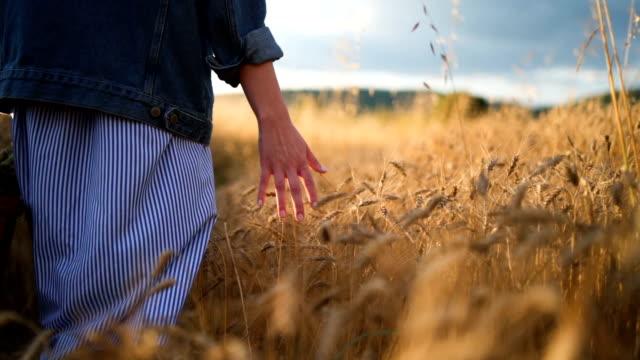 vídeos de stock e filmes b-roll de hand caressing the wheat stems at sunset - cena de tranquilidade
