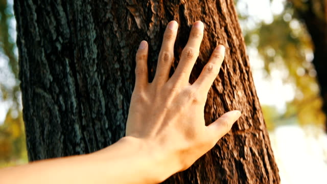 hand caressing tree,feel nature - tree trunk stock videos & royalty-free footage