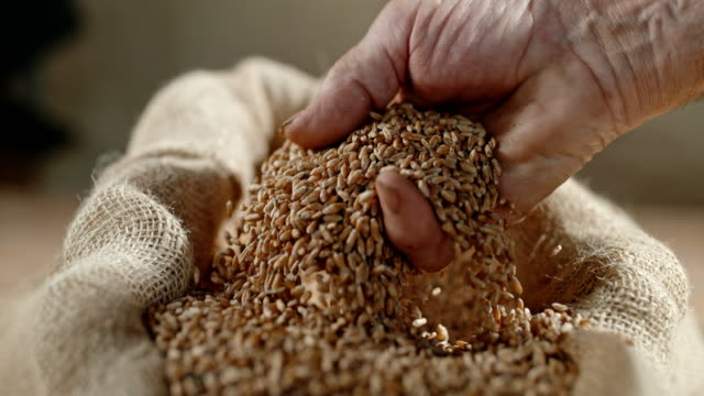 slo mo hand cupping wheat grains - sack stock videos & royalty-free footage