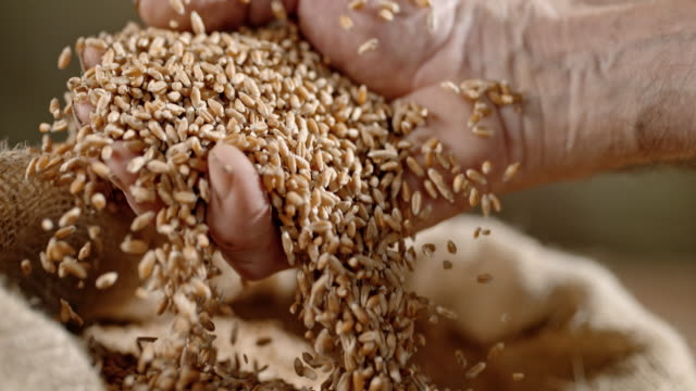 slo mo hand cupping wheat grains - wholegrain stock videos & royalty-free footage