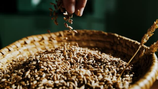 stockvideo's en b-roll-footage met slo mo hand cupping tarwe granen - volkoren