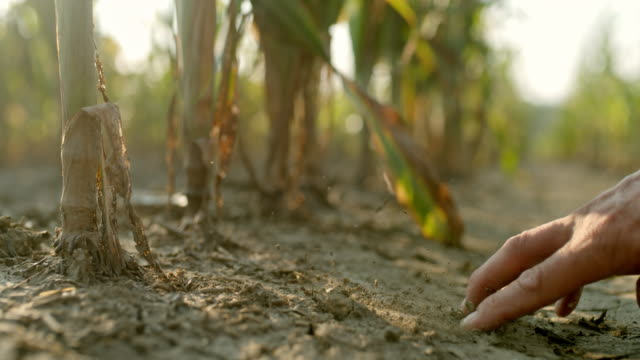 slo mo hand digging the dirt in the field - drought stock videos & royalty-free footage