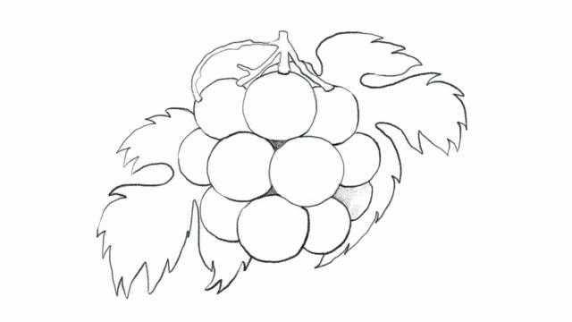 vídeos de stock, filmes e b-roll de desenho à mão de videoclipe de uvas frescas pione - arte linear