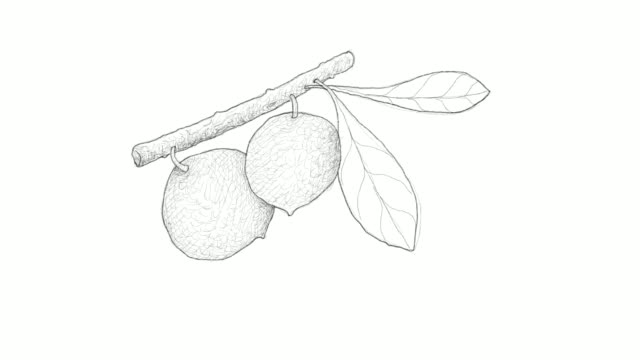 hand drawn of aboirana fruits video clip - vitamin a nutrient stock videos and b-roll footage