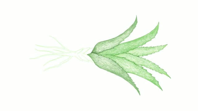 hand drawn of aloe vera plants video clip - cactus drawing stock videos & royalty-free footage