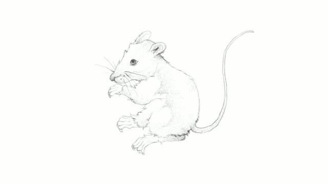 hand drawn of autumn field mice video clip - animal drawn stock videos & royalty-free footage