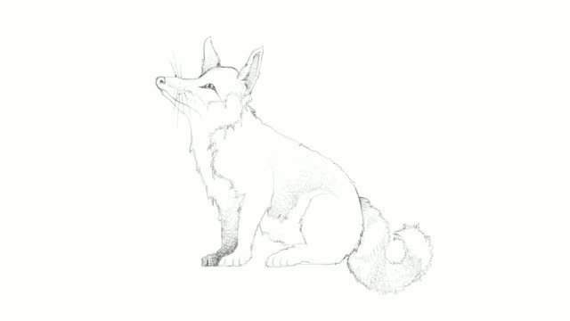 hand drawn of autumn fox video clip - animal drawn stock videos & royalty-free footage