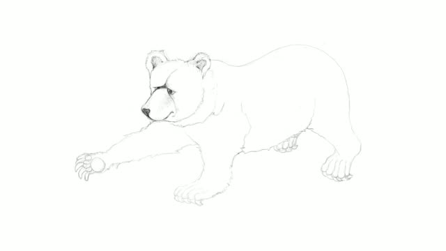hand drawn of autumn grizzly bear video clip - animal drawn stock videos & royalty-free footage