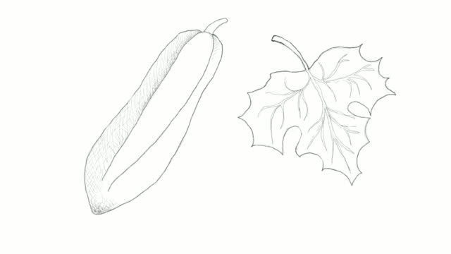 hand drawn of babaco papaya fruits video clip - vitamin a nutrient stock videos & royalty-free footage