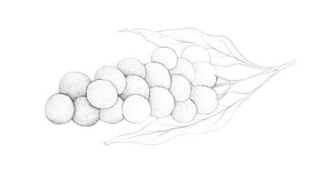 vidéos et rushes de main de clip vidéo baccaurea parviflora - pince à papier