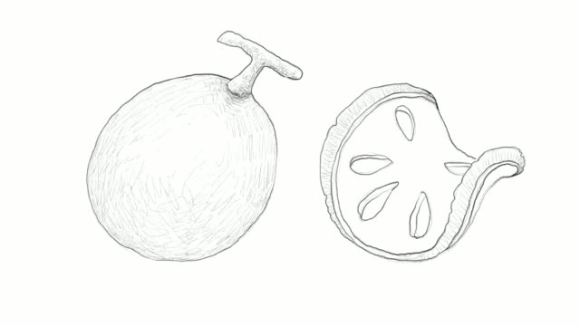 hand drawn of bael fruits video clip - line art stock videos & royalty-free footage