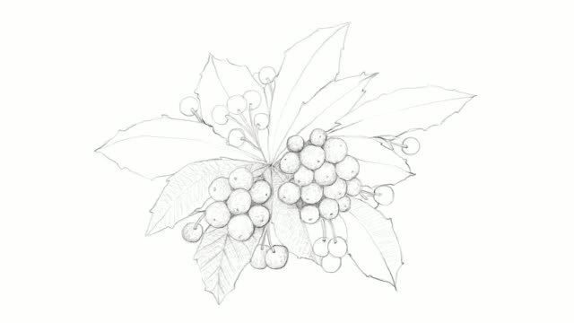 hand drawn of christmas berries video clip - blueberry stock videos and b-roll footage
