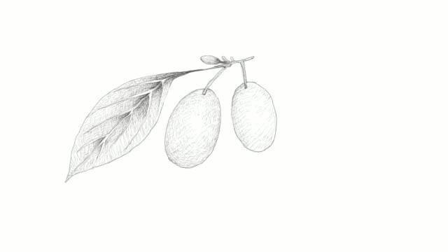 vídeos de stock e filmes b-roll de hand drawn of cornelian cherries video clip - cornus