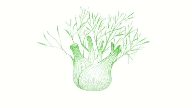 hand drawn of fennel bulb video clip - plant bulb stock videos & royalty-free footage