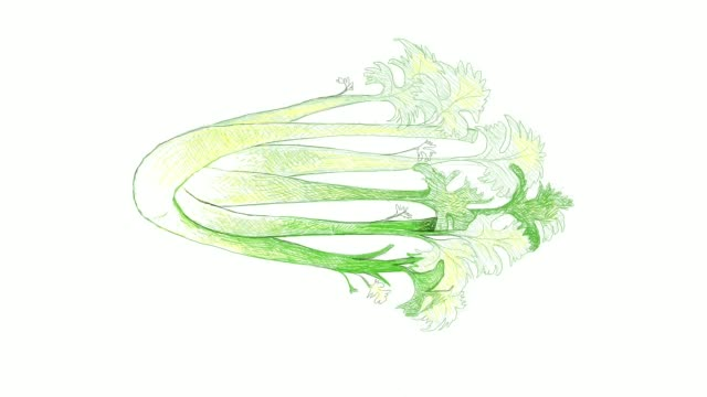 hand drawn of fresh celery video clip - celery stock videos & royalty-free footage