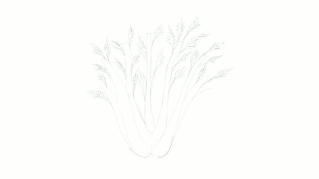 hand drawn of fresh celery video clip - line art stock videos & royalty-free footage