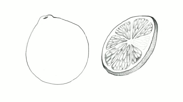 hand drawn of fresh limes video clip - illustration technique stock videos & royalty-free footage