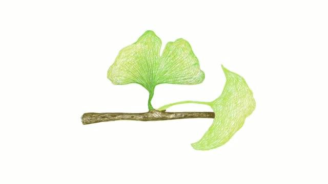 stockvideo's en b-roll-footage met hand getrokken van ginkgo biloba plant video clip - antioxidant