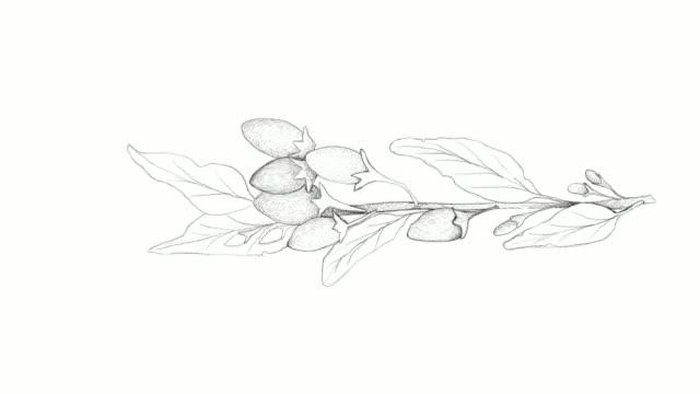 vídeos de stock e filmes b-roll de hand drawn of goji berries video clip - lichia