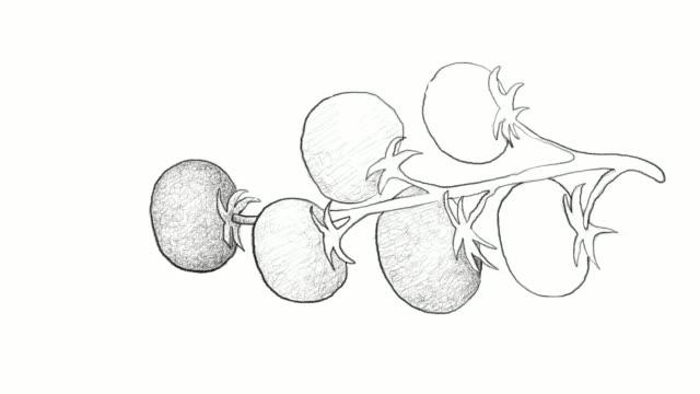 vídeos y material grabado en eventos de stock de mano dibujada de tomatitos video clip - tomate