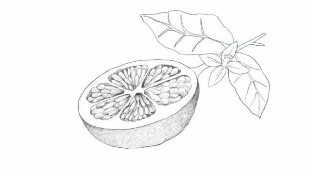 vidéos et rushes de main de pamplemousse fruits clip vidéo - pince à papier