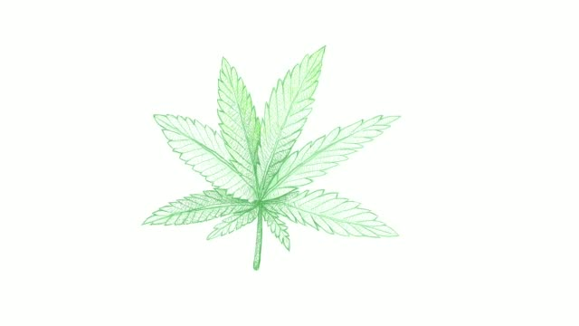 hand drawn of hemp leaf and seeds video clip - illustration stock videos & royalty-free footage