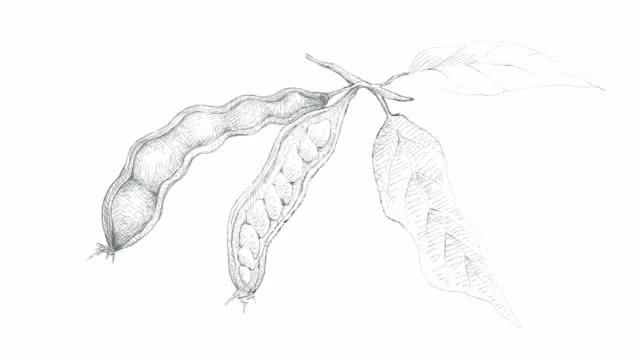 hand drawn of ice cream beans video clip - illustration technique stock videos & royalty-free footage